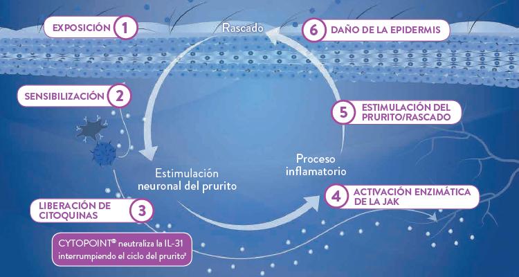 Cytopoint Mecanismos Image 2